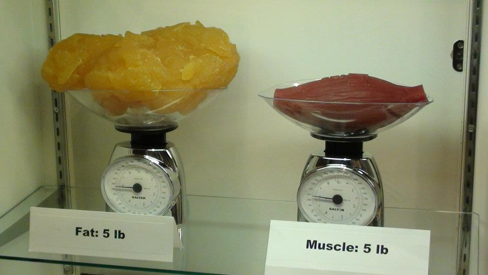 Can I Turn My Fat into Muscle?